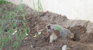 turtle-nest-27-2014